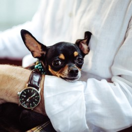 Does Your Pet Need Pampering? Check Out These Local Spots!