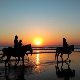 Great Vacation Ideas For Nashville Equestrians