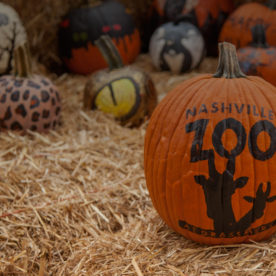 Nashville Boo at the Zoo