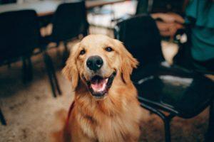 nashville dog friendly patios